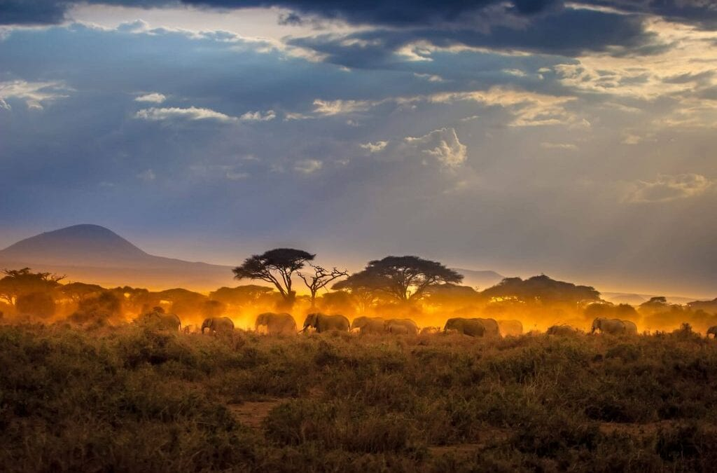Safari Inspiration: 9 Perfect Days on a Kenya Safari
