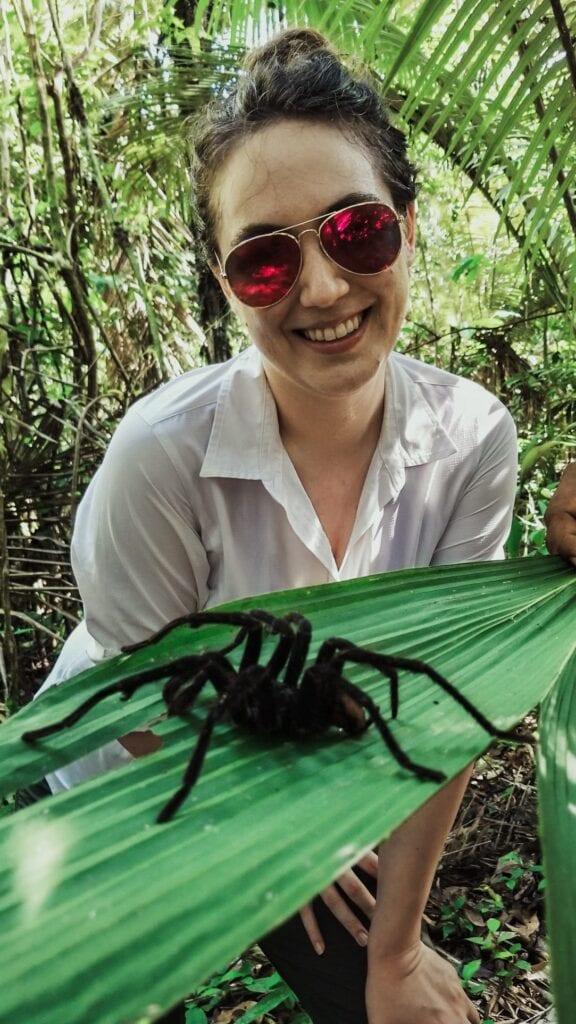 Bird eating tarantula spider seen in the rainforest on the Amazon River
