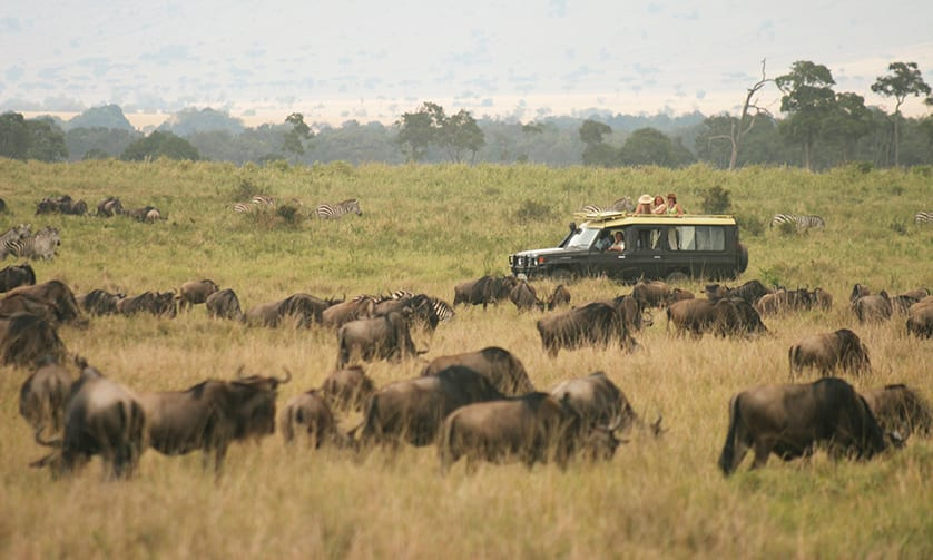 Wildlife Safari by Private Jet